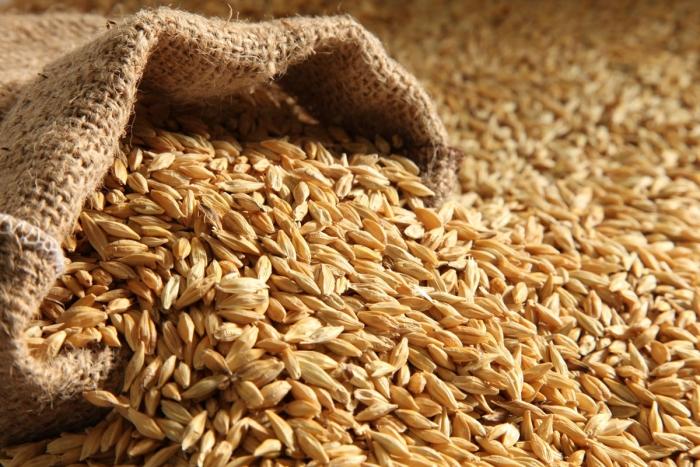 AB InBev спільно з EverGrain почне виробляти продукти з рослинним протеїном